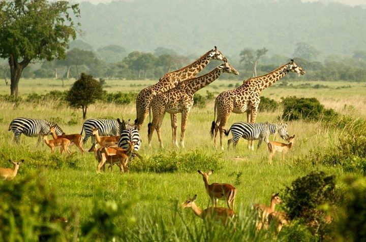Uganda - Amazing, diversified Wildlife